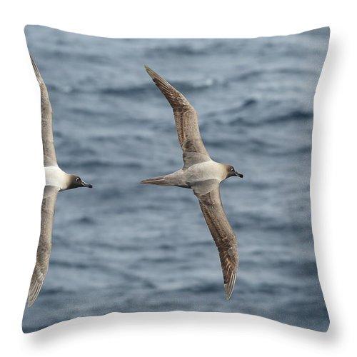 Albatross Throw Pillow featuring the photograph Light-mantled Albatross Duo by Bruce J Robinson