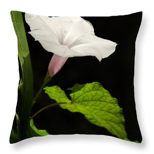 Flower Throw Pillow featuring the photograph Light Out Of The Dark by Christopher Holmes