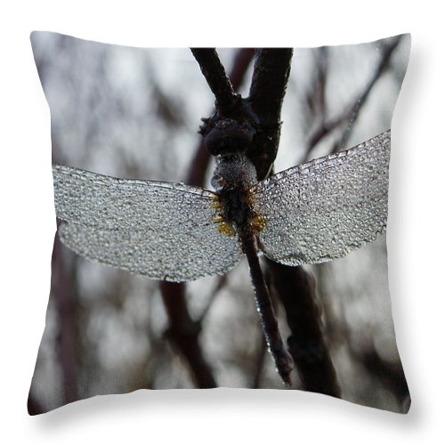 Insects Throw Pillow featuring the photograph Like A Glass Beaded Ornament by Peggy King