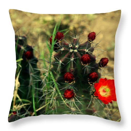 Cactus Throw Pillow featuring the photograph Like A Little Red Star by Susanne Van Hulst