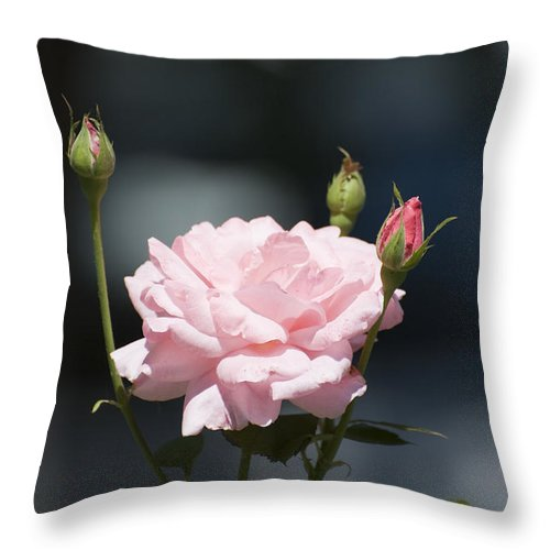 Rose Throw Pillow featuring the photograph Like A Rose by Adrian Bud