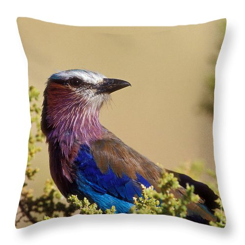 Lilac Breasted Roller Throw Pillow featuring the photograph Lilac Breasted Roller by Sandra Bronstein