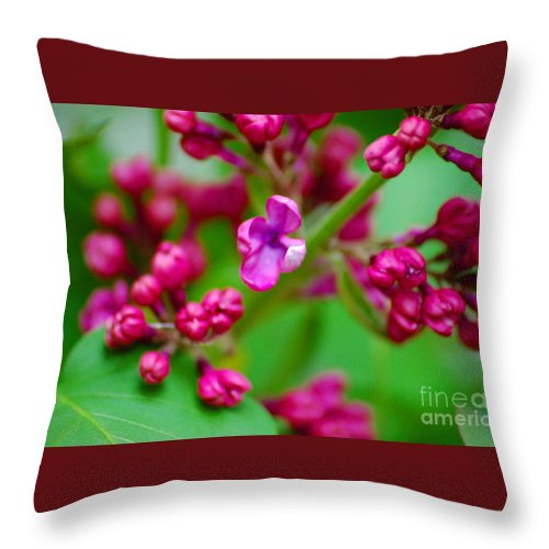 Lilac Throw Pillow featuring the photograph Lilac Opening by Elizabeth Stone
