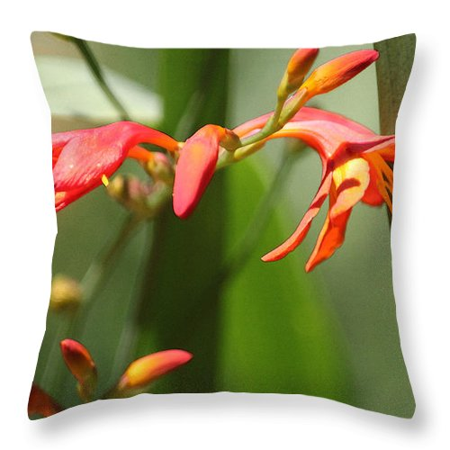Red Lilies Throw Pillow featuring the photograph Lilies On Fire II by Suzanne Gaff