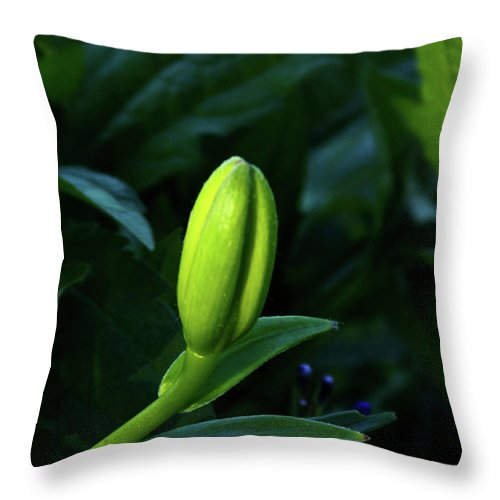 Lily Throw Pillow featuring the photograph Lilly Bud by Douglas Barnett