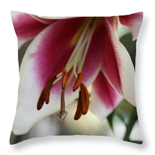 White Pink Throw Pillow featuring the photograph Lily Beauty by Christiane Schulze Art And Photography