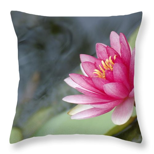 Lily Pads Throw Pillow featuring the photograph Lily Pads by Donna Bentley