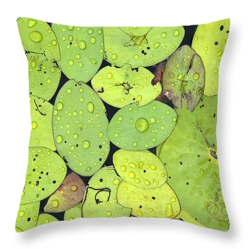 Lily Pads Throw Pillow featuring the photograph Lily Pads by Jessica Wakefield