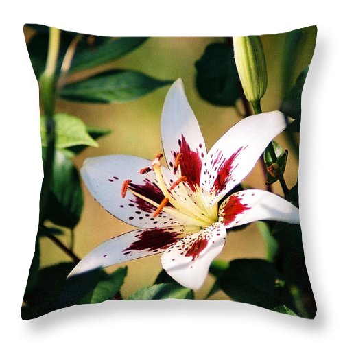 Flower Throw Pillow featuring the photograph Lily by Steve Karol