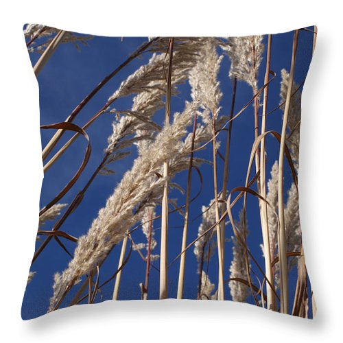 Photography Throw Pillow featuring the photograph Line And Loop by Shelley Jones