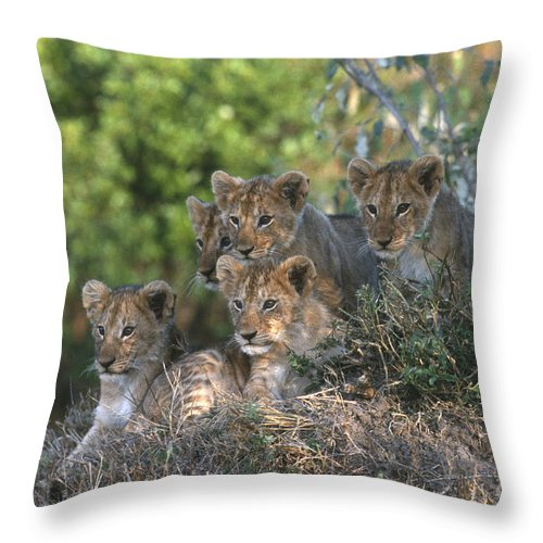 Lions Throw Pillow featuring the photograph Lion Cubs Awaiting Mom by Sandra Bronstein