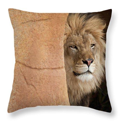 Lion Throw Pillow featuring the photograph Lion Emerging  Captive by Steve Gadomski
