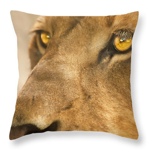 Lion Throw Pillow featuring the photograph Lion Face by Carolyn Marshall