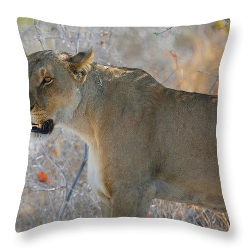 Lion Throw Pillow featuring the photograph Lioness by Bruce J Robinson