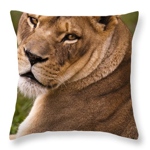 Lion Throw Pillow featuring the photograph Lions Beauty by Chad Davis