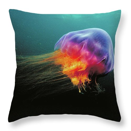 Mp Throw Pillow featuring the photograph Lions Mane Cyanea Capillata Jellyfish by Scott Leslie