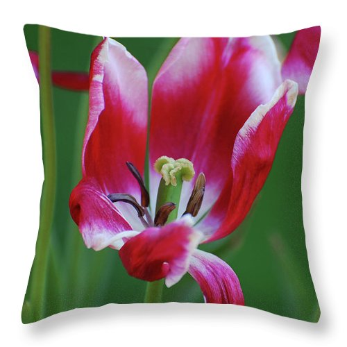Tulip Throw Pillow featuring the photograph Lips Say Goodbye by Jean Booth