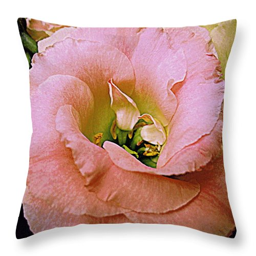 Flowers Throw Pillow featuring the photograph Lisianthus Bloom 2 by Bonita Brandt