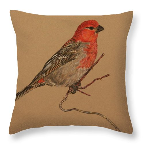 Bird Throw Pillow featuring the drawing Little Bird by Michelle Miron-Rebbe