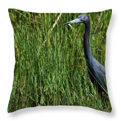 Little Blue Heron Throw Pillow featuring the photograph Little Blue by Melanie Moraga