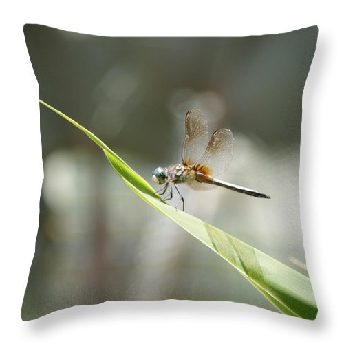 Dragonfly Throw Pillow featuring the photograph Little Dragon by Shelley Jones