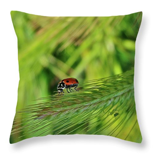 Ladybug Throw Pillow featuring the photograph Little Lady by Diana Hatcher