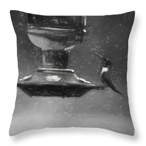 Bird Throw Pillow featuring the photograph Little Male Hummingbird In Charcoal by Barb Dalton