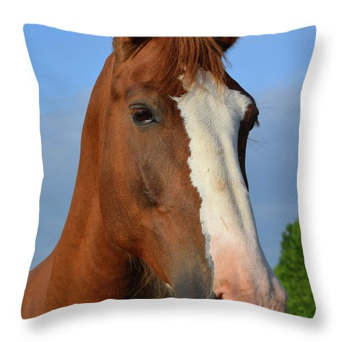 Horse Throw Pillow featuring the photograph Little Mare by Chris Busch
