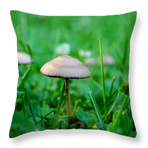 Richard Reeve Throw Pillow featuring the photograph Little Mushrooms by Richard Reeve
