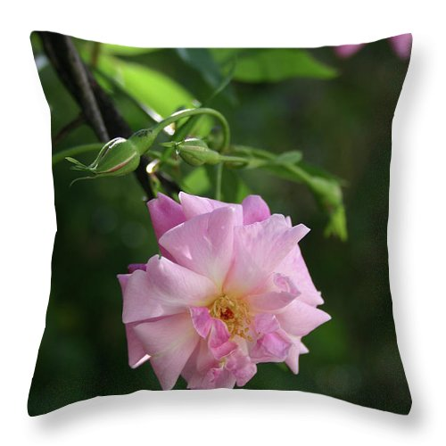 Little Throw Pillow featuring the photograph Little Pink by Nina Fosdick