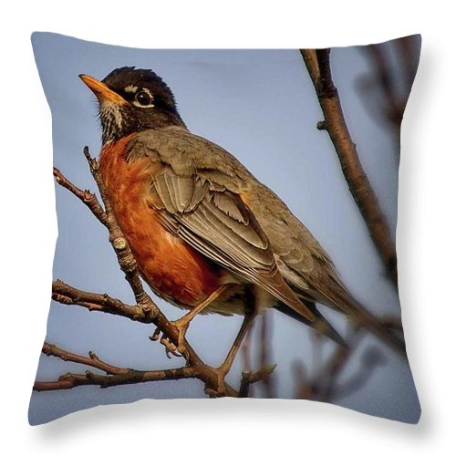 Robin Throw Pillow featuring the photograph Little Robin by Gaby Swanson