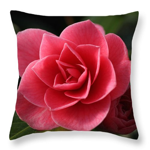 Camellia Throw Pillow featuring the photograph Little Ruby by Tammy Pool