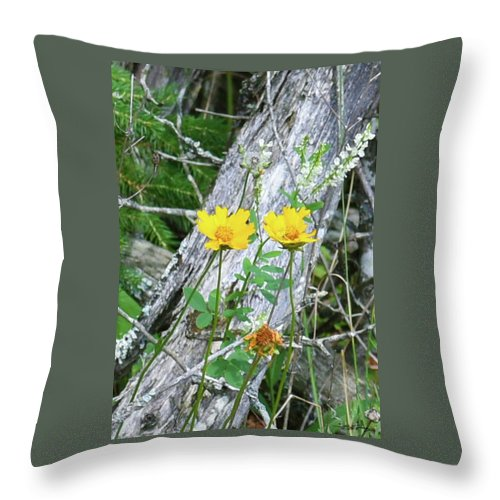 Tickseed Throw Pillow featuring the photograph Living And The Dead by Sally Sperry