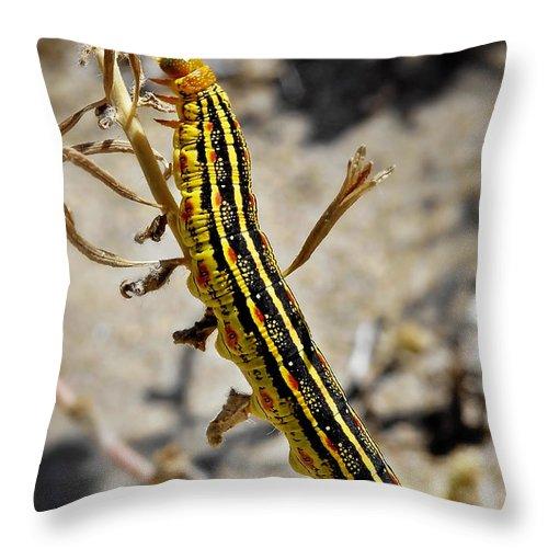 Caterpillar Throw Pillow featuring the photograph Living Desert by Christine Till