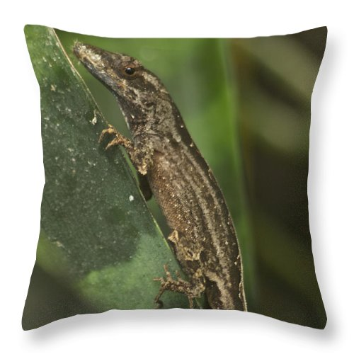 Wildlife Throw Pillow featuring the photograph Lizard 3 by Michael Peychich