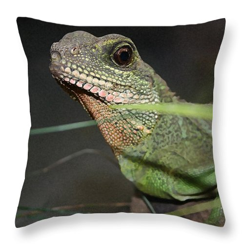 Lizard Throw Pillow featuring the photograph Lizzie by Mary Haber