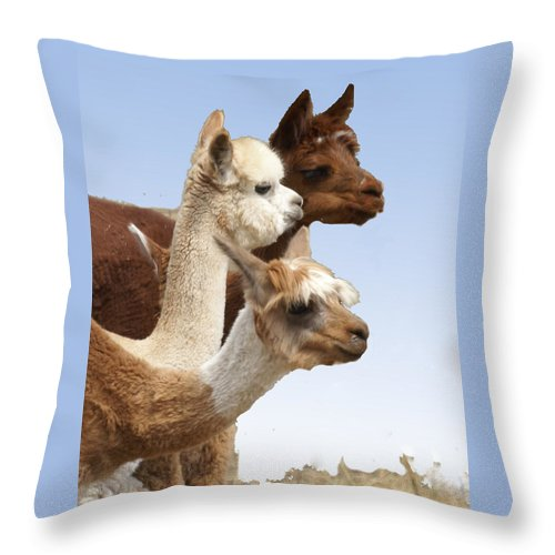 Llama Throw Pillow featuring the photograph Llama's Three by Heather Coen