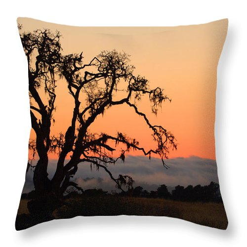 Tree Fog Landscape Weather Sunset Orange Nature Botanical Throw Pillow featuring the photograph Loan Tree Overlooking Fog by Jill Reger