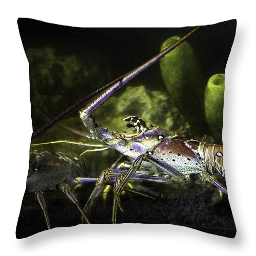 Lobster Throw Pillow featuring the photograph Lobster In Love by Marilyn Hunt