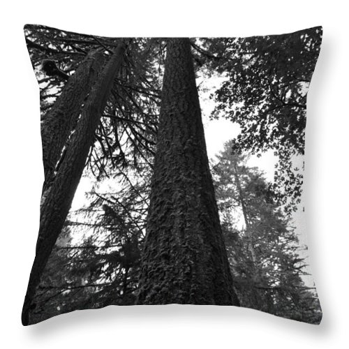 Trees Throw Pillow featuring the photograph Lofty Tree by Noah Cole