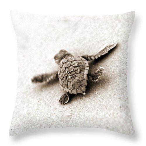 Loggerhead Turtle! Hilton Head Island Throw Pillow featuring the photograph Loggerhead by Michael Stothard
