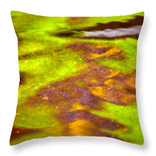 Water Throw Pillow featuring the photograph Lollipop by Donna Blackhall