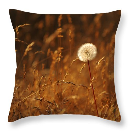 Nature Outdoors Field Dandelion Alone Single Sole Botanical Throw Pillow featuring the photograph Lone Dandelion by Jill Reger