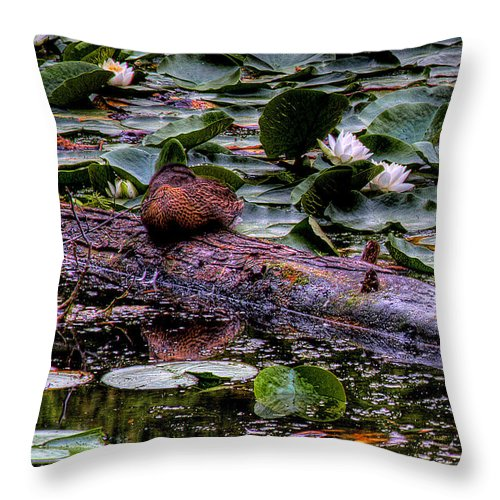Lilly Pad Throw Pillow featuring the photograph Lone Duck by David Patterson