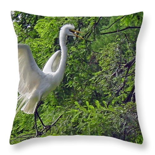 Great White Egret Throw Pillow featuring the photograph Lone Egret by Suzanne Gaff