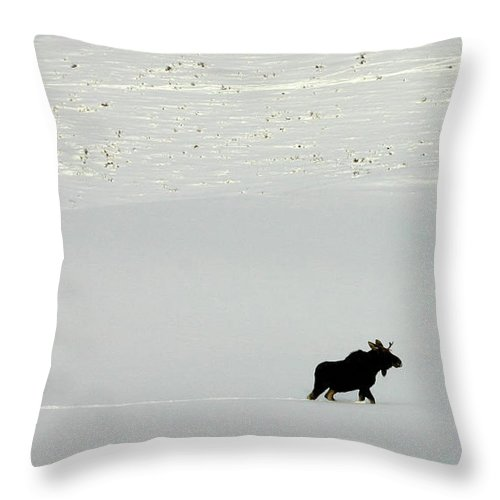 Moose Throw Pillow featuring the photograph Lone Moose by Patricia Montgomery