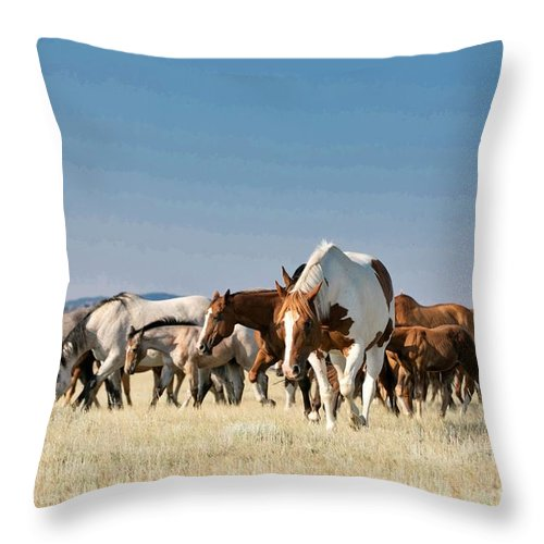 Paint Horse Throw Pillow featuring the photograph Lone Paint by Terri Cage