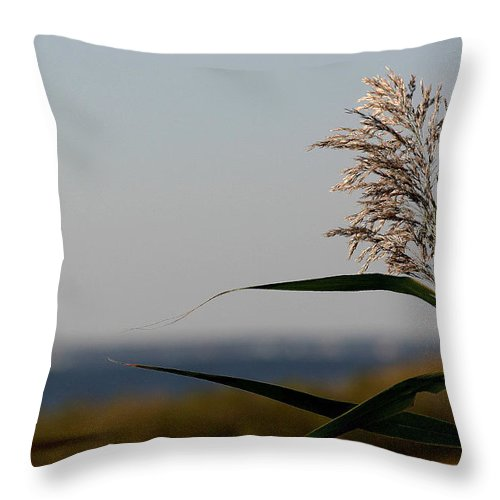 Seagrass Throw Pillow featuring the photograph Lone Seagrass by Mary Haber