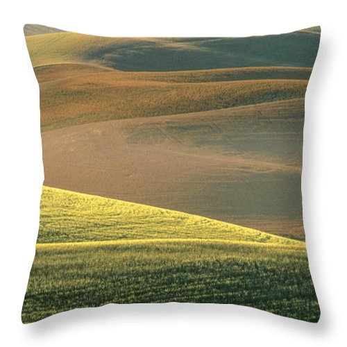 Landscape Throw Pillow featuring the photograph Lone Tree In The Palouse by Sandra Bronstein