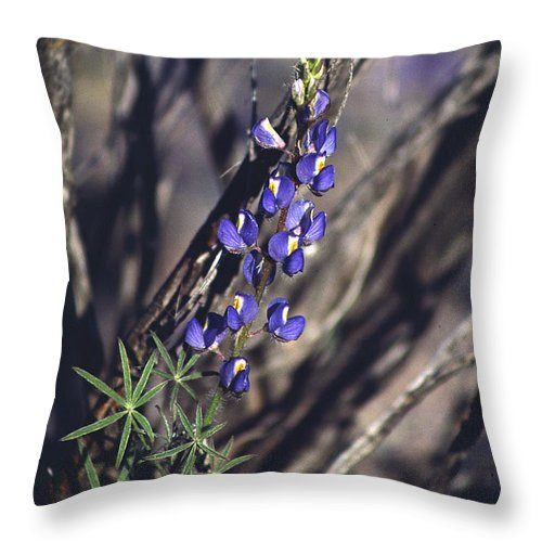 Flower Throw Pillow featuring the photograph Lonely Lupine by Randy Oberg